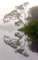 Misty Morning in the Peruvian Amazon