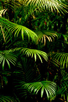 Amazon Palm Leaves
